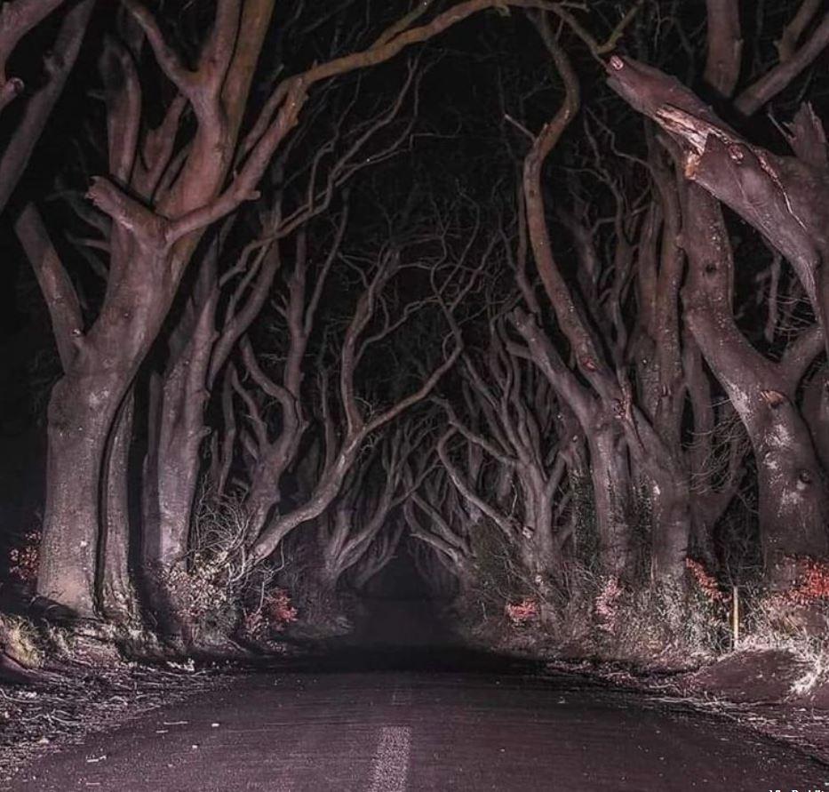 الجانب المخيف من أيرلندا - غابات أيرلندا